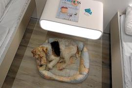 Bei Baleària dürfen nun auch Hunde mit in die Kabine