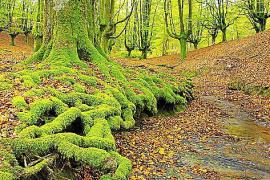 Wälder wie in deutschen Landen gibt es dort.