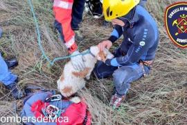 Feuerwehr rettet Hund aus Unfall-Auto im Fluss