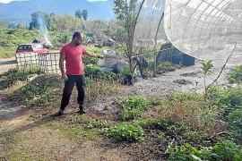 Fäkalschlamm überschwemmt Gärten in Sóller