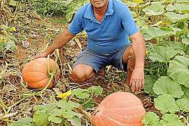 Kartoffelkürbis aus Muro als Insel-Spezialität registriert