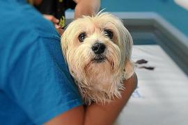 Hundezüchter chipte Tiere ohne Erlaubnis