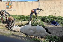Palmas Feuerwehr rettet Pferd aus Grube