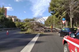 Sturm verursacht zahlreiche Zwischenfälle auf Mallorca