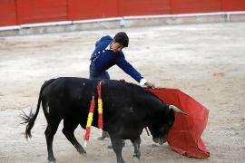 Tierschützer machen mobil gegen Stierkampf