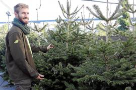 Hier gibt's Weihnachtsbäume frisch aus dem Wald