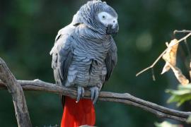 Drei seltene Papageien in Campos beschlagnahmt