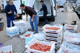Fischer auf Mallorca hoffen auf gute Gambas-Preise