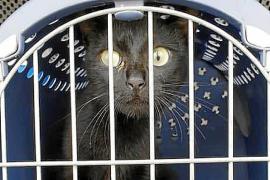 Palmas Hafen-Katze ist wieder auf Abwegen