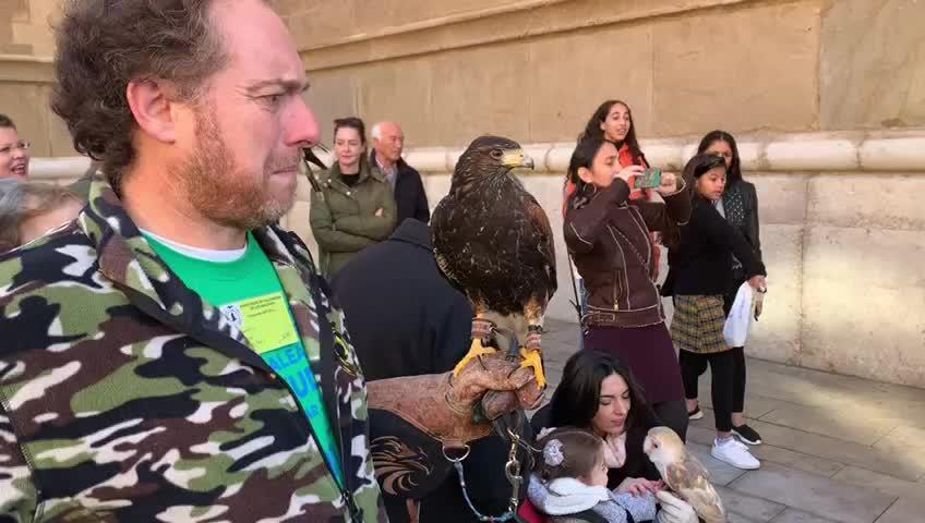 Palma feiert Tiersegnung mit Uhu und Falke