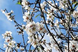 Frühling mitten im Winter auf Mallorca