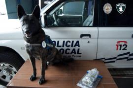 Polizeihunde an Leishmaniose erkrankt