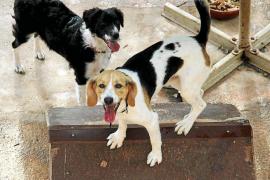Härtere Strafen bei Tiermisshandlung gefordert
