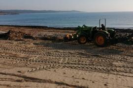 Manacor macht S'Illot-Strand nach Sturm sauber