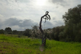 Der Winter zeigt sich wieder ungehemmter auf Mallorca