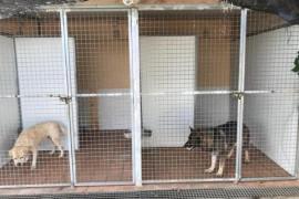Leishmaniose-Hunde der Polizei mangelhaft gepflegt