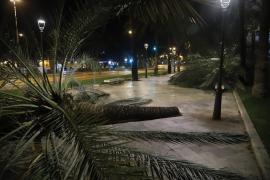 Wind weht acht Palmen an Uferstraße in Palma um