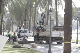 Umgestürzte Palmen werden analysiert