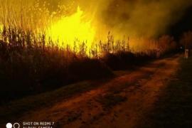 Feuer auf 16 Hektar im S'Albufera-Park