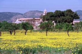 Frühling auf Mallorca wird wärmer als 2019