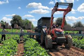 Mallorcas Landwirtschaft läuft trotz Coronakrise weiter