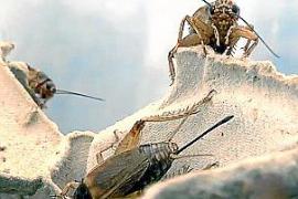 TV-Tipp: Insekten auf dem Teller