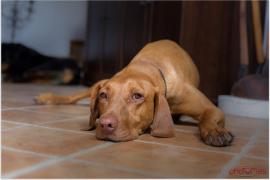 Ein Hund braucht beides: Auslauf und geistige Aktivität. Zurzeit bekommt er von beidem eventuell zu wenig, aber es gibt Tipps, wie man Hund und Besitzer kreativ beschäftigen kann.