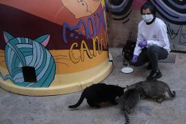 Wegen Alarmzustand mehr Katzen in Palma