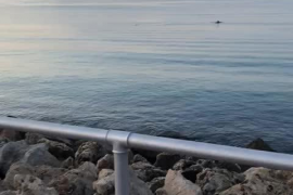 Delfine neben Palmas Can-Pere-Antoni-Strand gesichtet