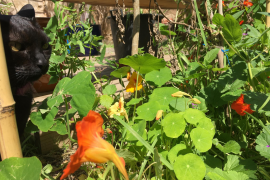 Wegen Ausgangssperre: Expedition im eigenen Garten