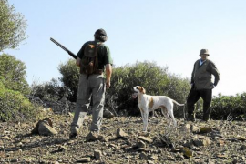 Strengere Regeln bei Jagd der Turteltaube auf Mallorca
