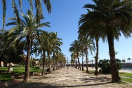Temperaturen auf Mallorca klettern auf bis zu 31 Grad