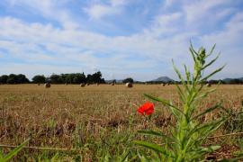 Nach den Wolken stellt sich totales Traumwetter auf Mallorca ein