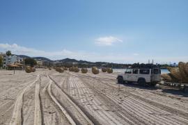 Alcúdia stellt schon Hunderte Sonnenschirme auf