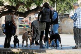 Geldstrafen für Hundebesitzer auf Mallorca