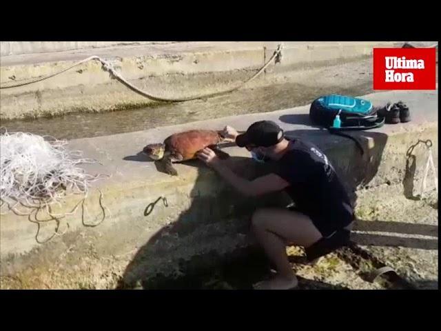 Verletzte Wasserschildkröte vor Mallorca geborgen