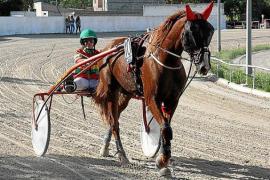 Auch Pferderennen auf Mallorca ohne Zuschauer