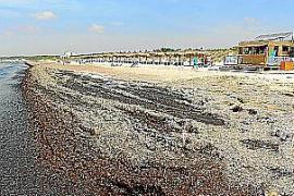 Liegen und Schirme jetzt auf Strand von Es Trenc platziert